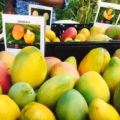 Mango Mania at the Botanic Park